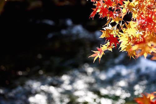 秋の紅葉と流れる川の画像