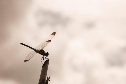 秋の虫トンボの画像