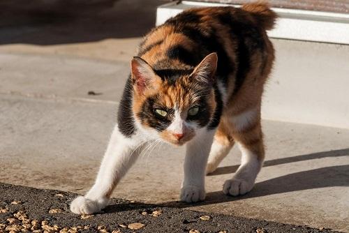 威嚇する猫の夢