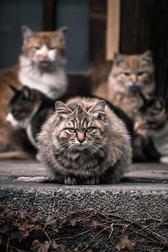 たくさんの猫の画像