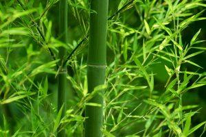 竹の夢に隠された意味とは