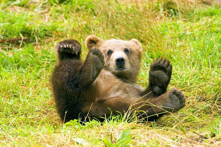 熊の夢に隠された意味とは