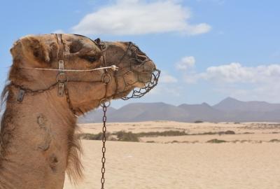 砂漠の夢に隠された意味とは