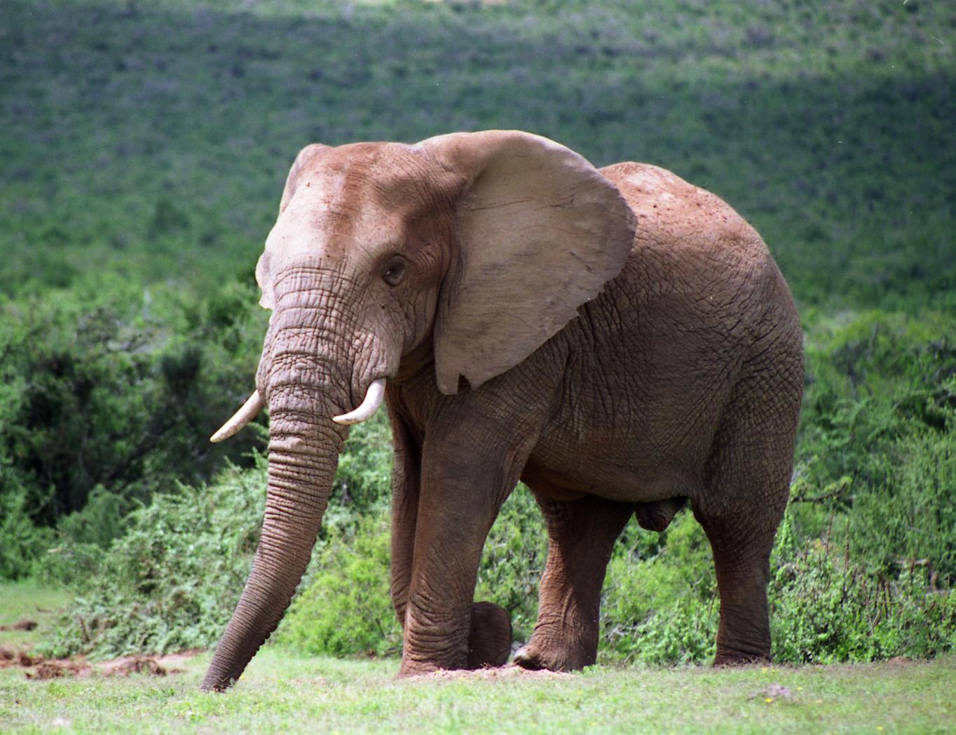 象の夢に隠された意味とは