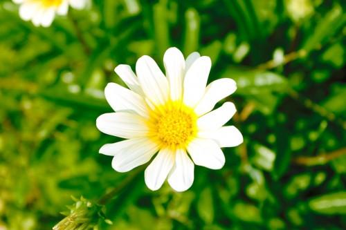 花の夢に隠された意味とは