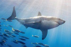 サメの夢に隠された意味とは