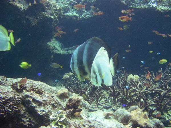 熱帯魚の夢に隠された意味とは