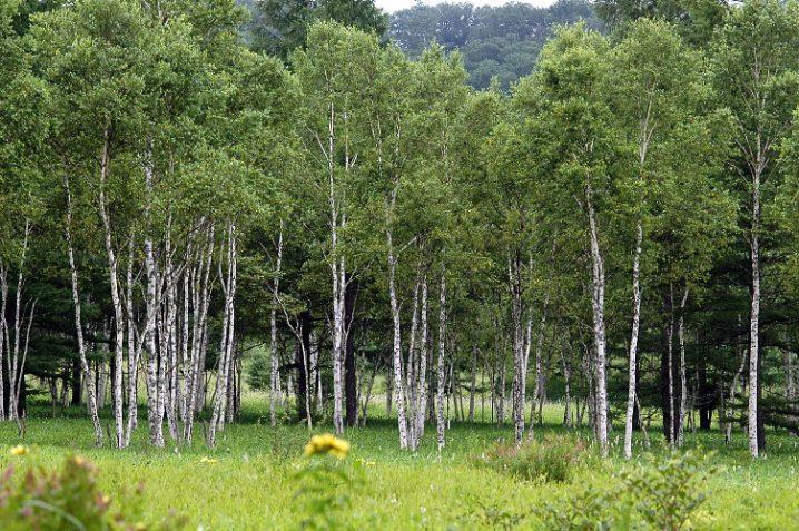 森の夢に隠された意味とは