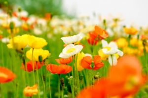 花畑の夢に隠された意味とは